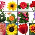 friendship-flowers-collage