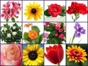 friendship-flowers-collage